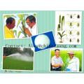 97% de Tc, 75% de Sp 50% de Wp, 30% de Ec Insecticida de Pesticida Acefato