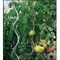Tomato Spiral Wire