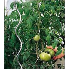 Fil en spirale de tomates