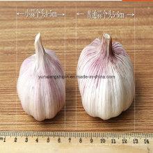 2016 Lowest China White Garlic