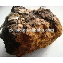 Most Popular Organic Natural Chaga Mushroom Powder