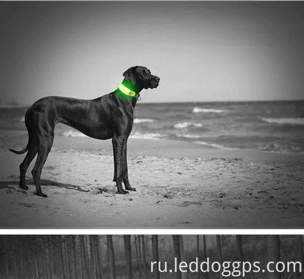 Pet Collar Led Lights