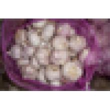 Exportateur d'ail blanc frais 2014 en Chine