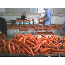 Zanahoria roja china fresca