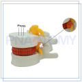 hot sale & high quality medical human lumbar model Of New Structure