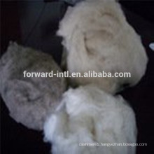 Top Quality On Sale with Best Price Pure Cashmere Fiber