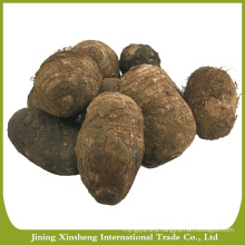 New arrival China high quality fresh taro