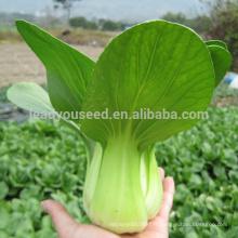 PK09 Yiqiu froid résistant p1 hybride pakchoi graines, graines de colza pour la plantation