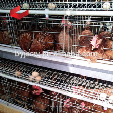 Gold Supplier Open House Battery Cage System/ Poultry Cage System