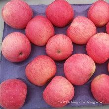 Haute qualité de fraîcheur rouge FUJI Pomme