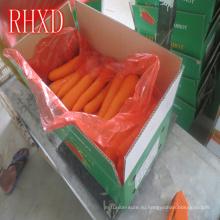 импорт свежей моркови