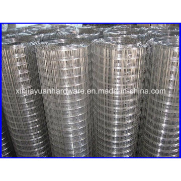 Plain Weave Welded Wire Mesh in Galvanized and Electro Galvanized