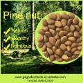 Pinhões naturais dos pinhões do pinho selvagem das porcas do pinho da natureza de 100% com escudos