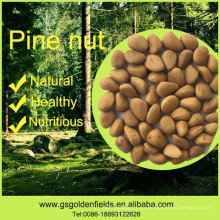 100% nueces de pino naturales nueces de pino silvestre nueces de pino orgánicas núcleos con conchas