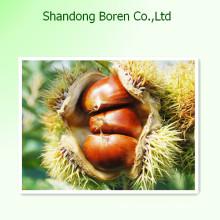 2015 Köstliche frische Kastanie in China