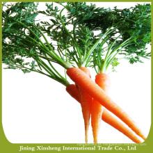 Produção de cenoura