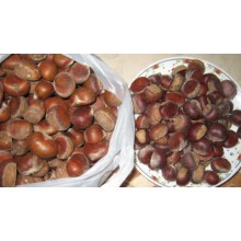Organic Raw Fresh Chestnut with Most Competitive Price