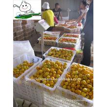 Свежий детский мандарин