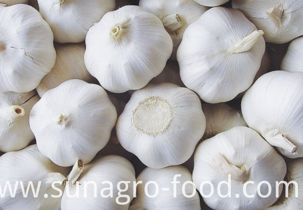 Ordinary quality white garlic