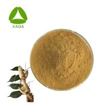 Polygonatum Sibiricum Extract Rhizoma Polygonati Powder 10: 1