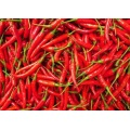Chaotian chili 4-7cm 10kg
