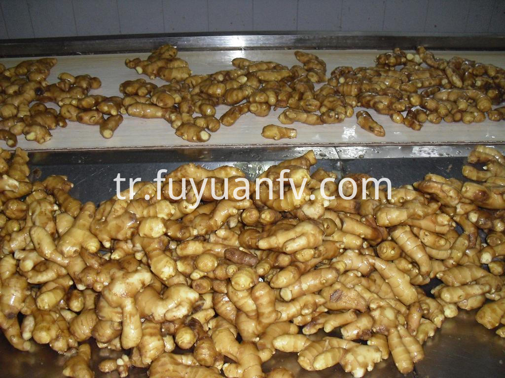 fresh ginger to Maldives