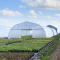 Uv Treated Agricultural Plastic Cover Film Pe Greenhouse Film