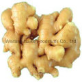 New Crop Fresh Ginger Vegetable