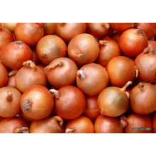 Golden Yellow Fresh Onion (5-7cm)