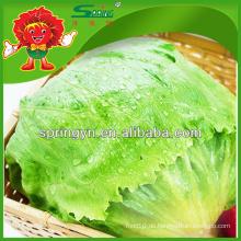 Aufblasbarer chinesischer eingelegter romaine iceberg salat