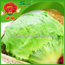 Chinoise gonflable chinoise en romaine iceberg lettuce