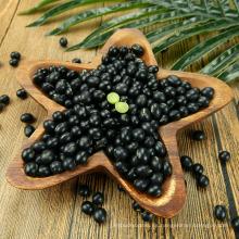Venta caliente New Crop 2016 Black Kidney Bean