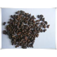 Factory Fructus Ligustri Lucidi/ Ligustrum Lucidum Ait. Extract Powder