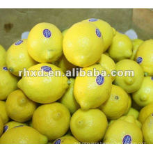 2012 fresh chinese lemon