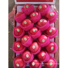 Exported to Europe Fresh Fruit Red FUJI Apple Delicious Apple