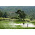 New Herbicide Glufosinate-Ammonium 98%Tc&200g/L