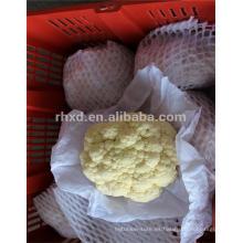 al por mayor exportador de coliflor fresco de China