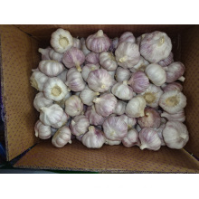 Fresh Garlic Best Quality Best Price