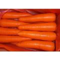 2014 New Crop Fresh Carrot (M grade)