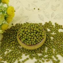 Сушеные маленькие зеленые фасоли mung