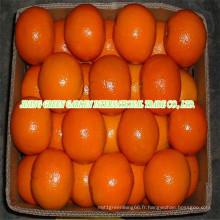 Orange frais de première qualité