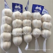 2016 Jinxiang new crop fresh garlic