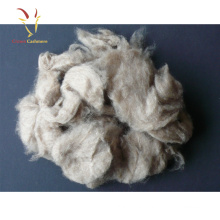 Dehaired High Qaulity cashmere Fiber from Inner Mongolia China