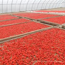 Vitamina fresca Goji Berry EU certificado