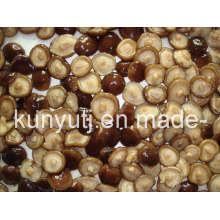 Cogumelo Shiitake enlatado com alta qualidade