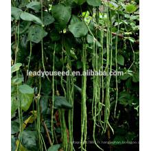 MBE04 Fengkai début maturité graines de haricots longs, graines de haricot chinois