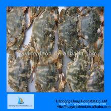 Fournisseur de crabe de boue frais congelé