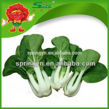 Leite fresco pak-choi orgânico chinês repolho frondoso