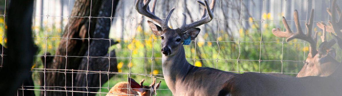 image Deer Tuff