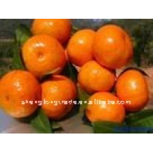China (NEW) fresh Orange LOW PRICE